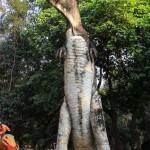 Vientiane 46
